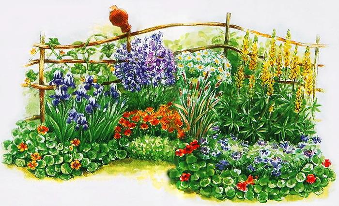 Клумба непрерывного цветения с весны до осени.  Выбор растений и схема посадки.