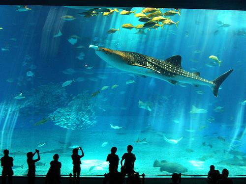 Самый большой аквариум в Европе находиться в Вленсии.