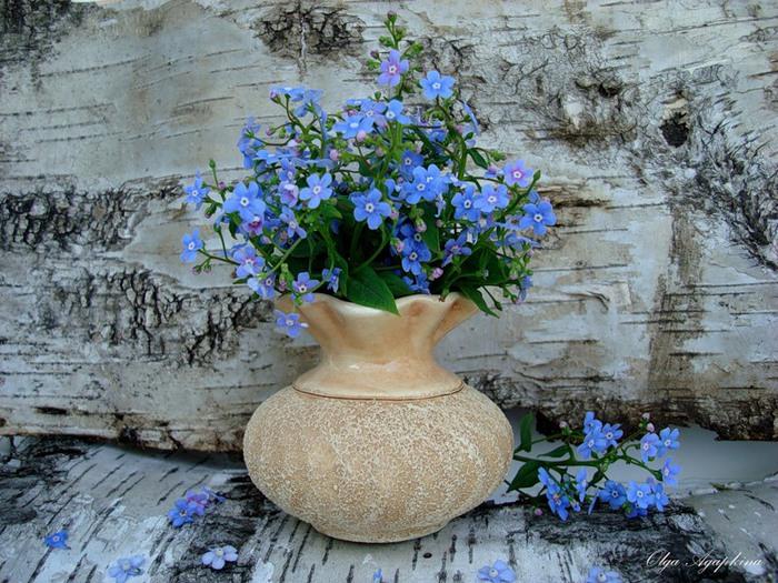 2013-05-25 21:38:02 - Виктория Вячеславовна Незабудка.  Цветок любви, цветок печали В тени среди болот растёт.