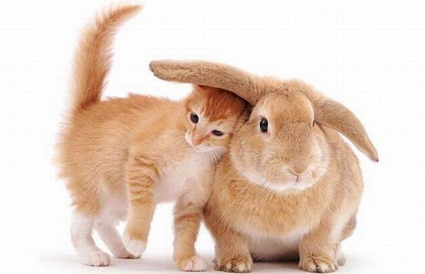 Рубрики кошки кошки и фото