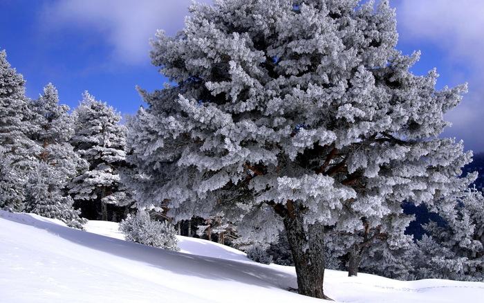 Country Winter Snow Scenes