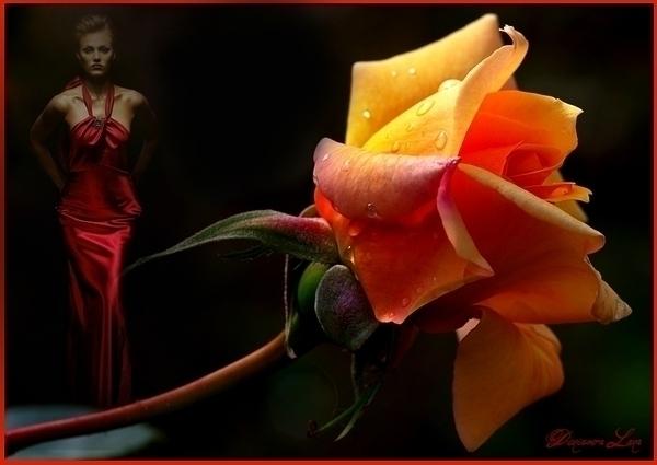 Фото цветы и стихи любимой