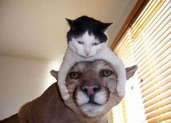Чтобы тело человека а голова кошки