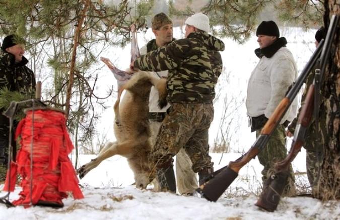 Охота на волков вблизи деревни