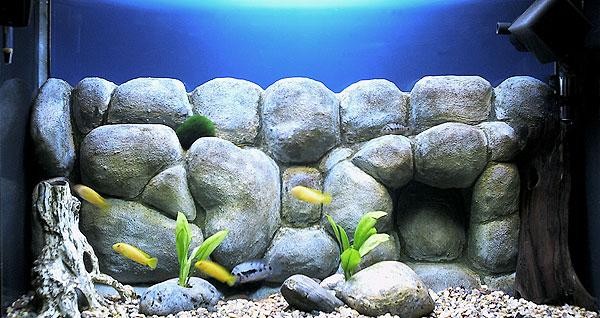 Дизайн аквариума своими руками фото