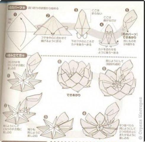 Верхняя часть страницы - схема лепестка, нижняя часть - сборка лепестков в чашелистик.  По этой схеме цветок состоит...