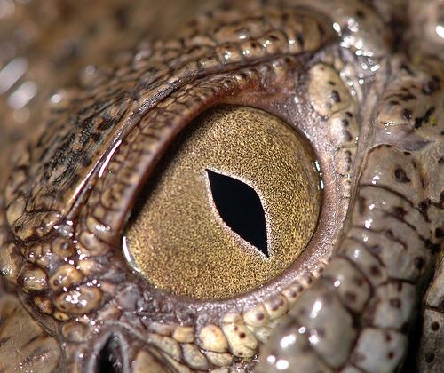 Фотографии аллигаторов.