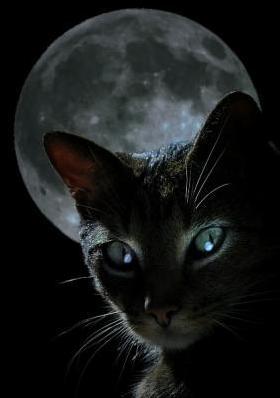 Только что прошёл, оказывается, День защиты чёрных кошек.