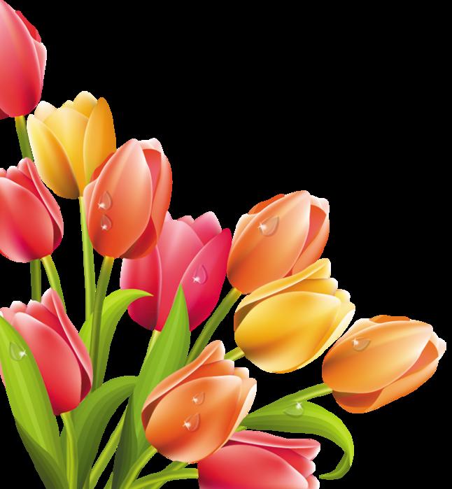 Цветы в векторе картинки 7