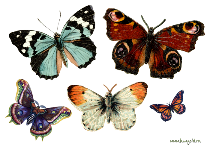 Бабочки в картинках для декупажа