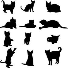 такса кот фото