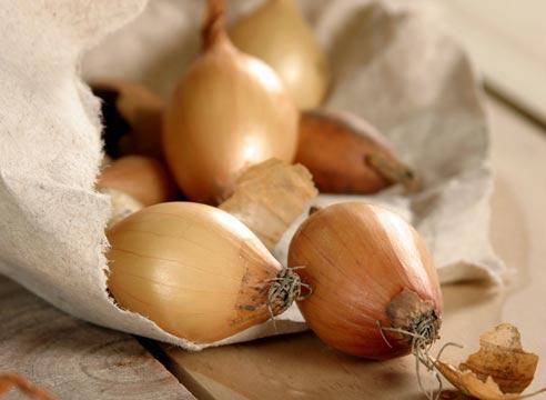 T.O.P. Onions: Лук-севок, Маринованный лук Лук-шалот Лук репчатый.