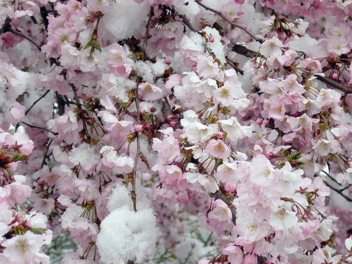Фото цветы зимой, бесплатные фото ...: pictures11.ru/foto-cvety-zimoj.html