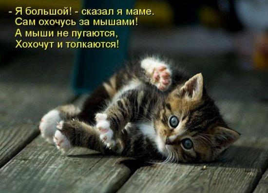 картинки котята милые с надписями.
