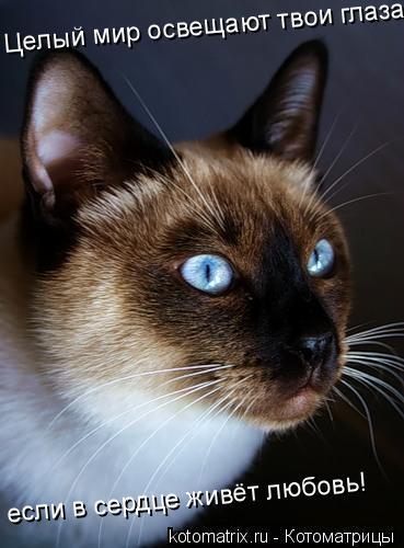 1. Позволяйте коту кушать и пить, когда ЕМУ захочется, а не когда ВАМ будет...  Кошке не нужно, чтобы ее любил весь...