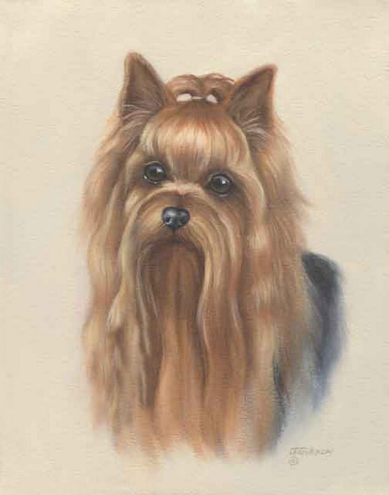 Йоркширского терьера, щенка-мальчика куплю недорого.  Выставочная и племенная карьера не интересует...