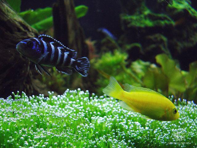 ФОТО.АКВАРИУМ.РУ - красота, фото аквариумов, рыбок, молюсков, растений, птиц, кошек, собак