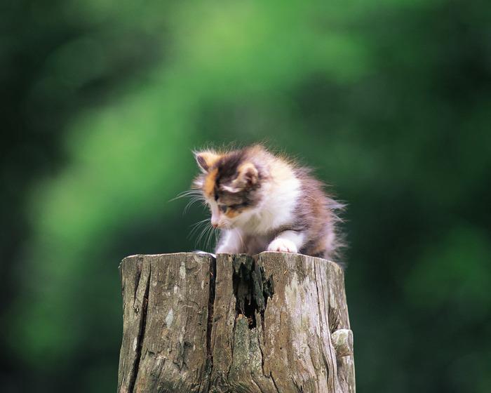 1.Лечение кошек асд Корень кровохлебки - 2 части; трава хвоща полевого, донника, таволги, кора ивы - по 3 части...