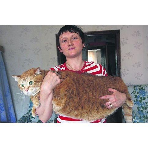 Толстые коты.