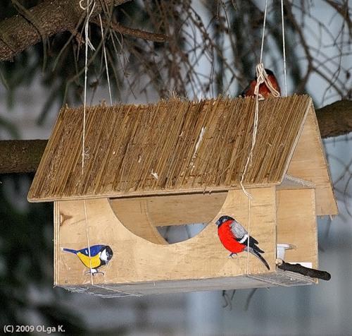 ...нелегко, а птицам и того хуже.  Найти пищу под снегом и льдом непросто.