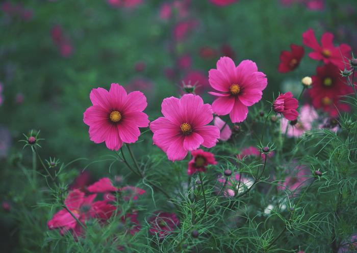 http://img1.liveinternet.ru/images/attach/c/2/70/848/70848574_1298024212_22_spring.jpg