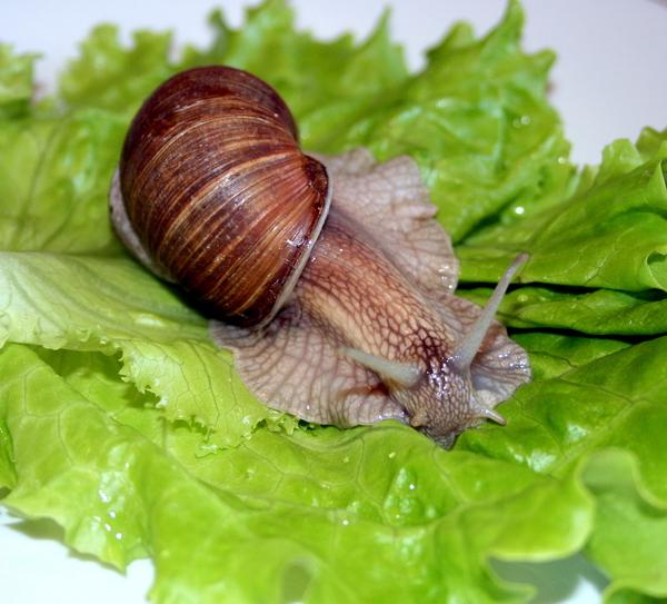 Французские блюдо из улиток — Простые и легкие рецепты: http://fitrafood.ru/francuzskie-blyudo-iz-ulitok.html