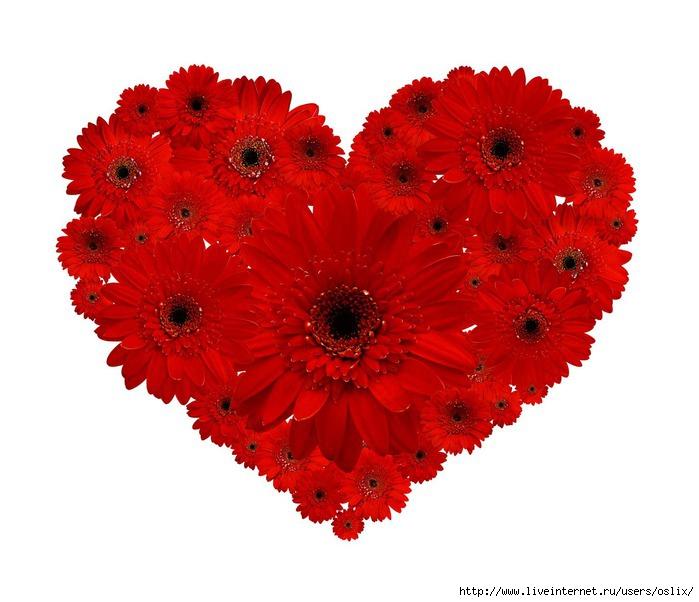 Картинки сердечки из цветов 4