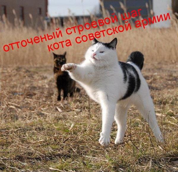 http://img1.liveinternet.ru/images/attach/c/2/71/123/71123563_134.jpg
