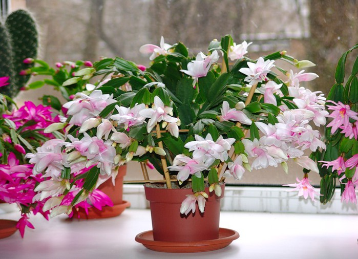 Комнатные растения простые и сложные