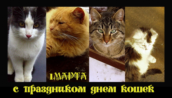 http://img1.liveinternet.ru/images/attach/c/2/71/387/71387694_koshki1.jpg