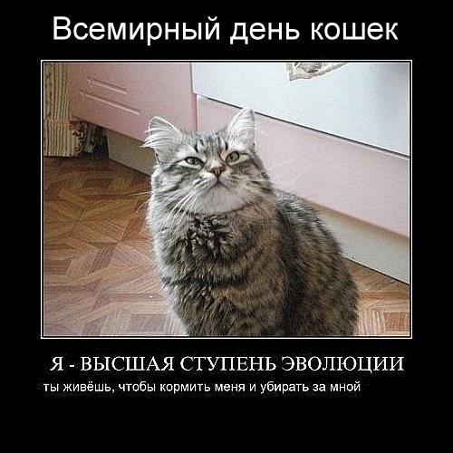 Ну! За весну. И за кошек с котами!: luganskiy_lgua