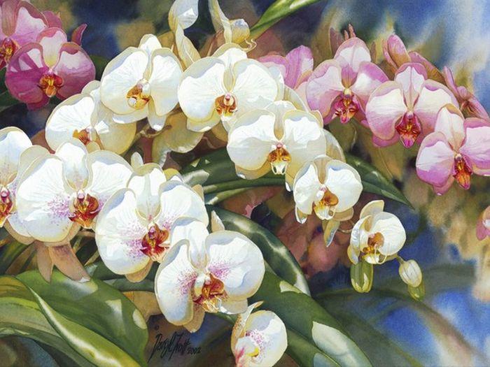 Darryl Trott Cascade Of Beauty.
