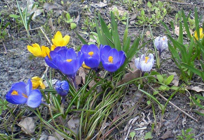 Наконец вот уже неделю весна нас радует своим присудствием).  Еще
