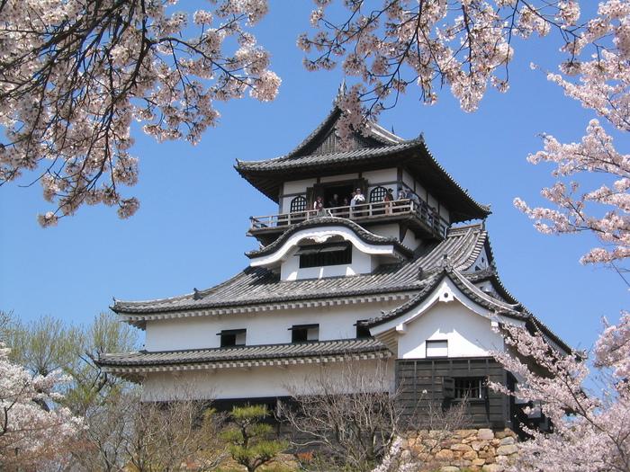 Строение замка расположено на живописном холме, у подножья которого протекает.