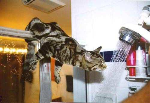 прикольные коты. коты кошки фото.