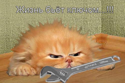 http://img1.liveinternet.ru/images/attach/c/2/71/903/71903694_1299864349_ZHiznya.jpg