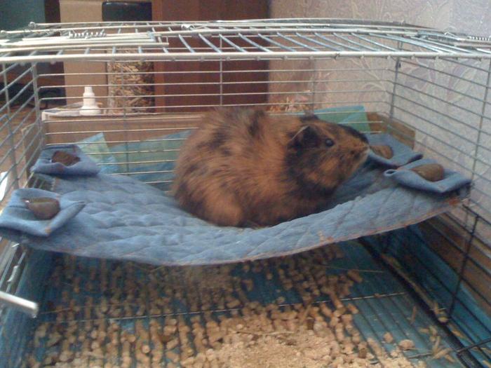 лежак для морской свинки выкройка