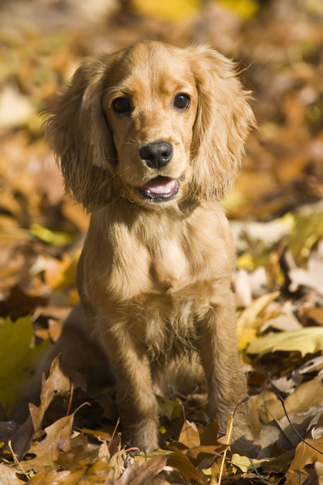 Лайки русско европейской щенки: фото маленьких щенков, воспитание щенка...