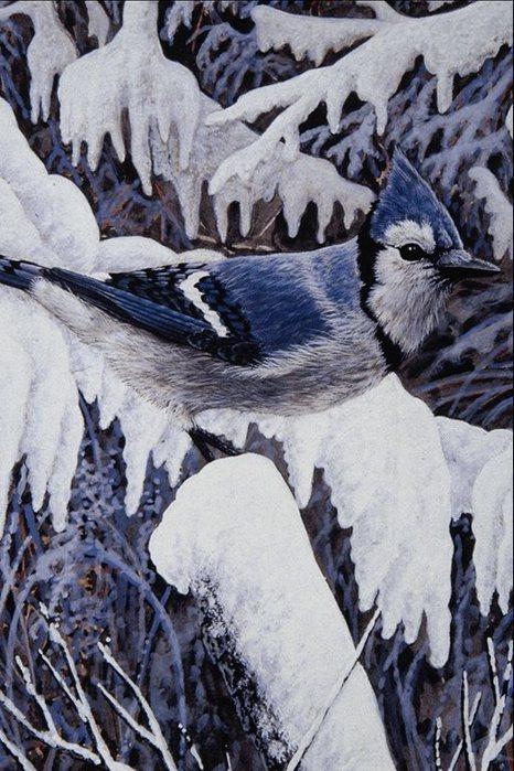 Птица с синим хохолком.