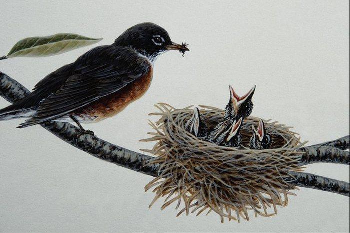 Название: Обед.  Птенцы в гнезде и птица с едой в клюве.  Рисунки птиц.