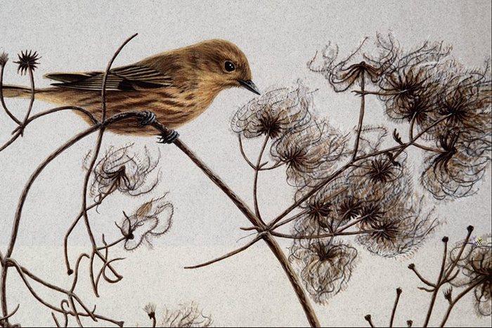 Сочетание коричневого, черного тонов перья птицы Рисунки птиц Птицы Животные МИР ФОТО.