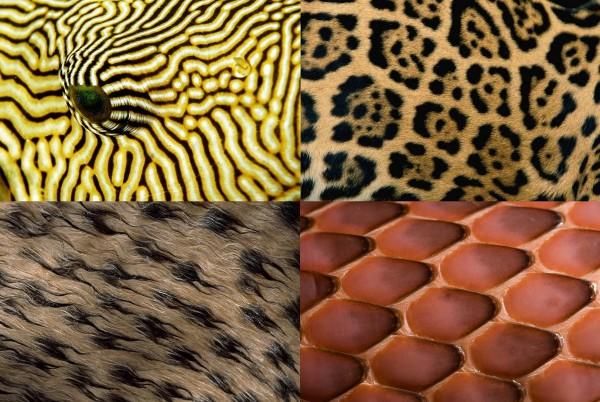 текстуры природа: