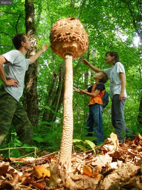 Огромные грибы