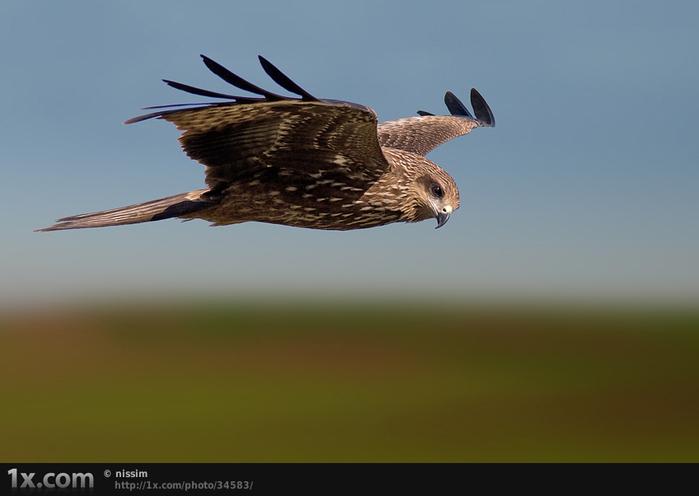 Фото 14, Птицы в полёте (26 фотографий)