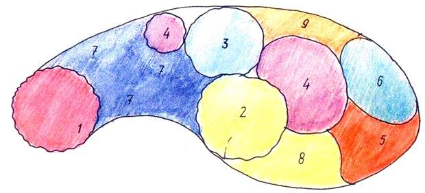Схема цветника для тенистого болотистого участка.