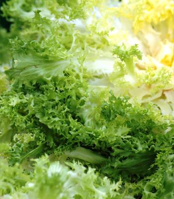 Горькие салаты с фото