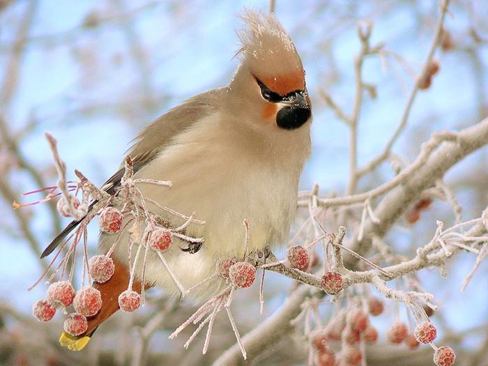 Эффективная методика Влияние птиц на нашу жизнь гораздо