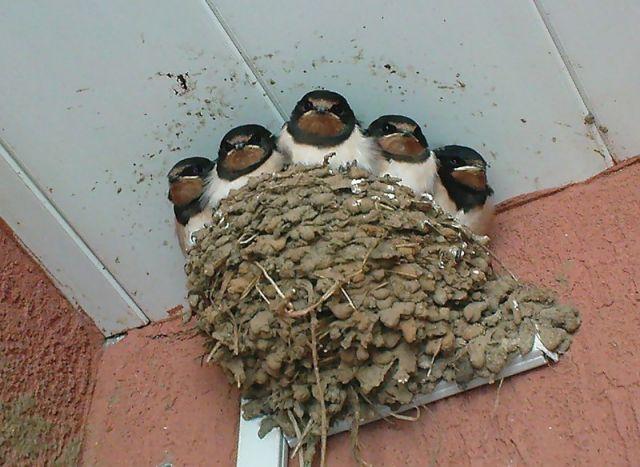 определение пола птиц. смотрите еще птицы цапли.