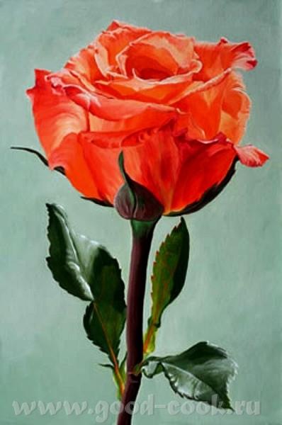 роза вышивка крестом схемы для начинающих.