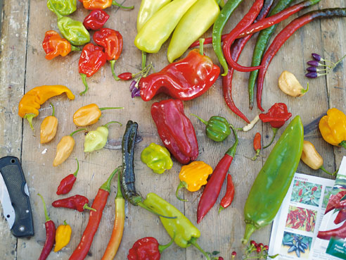 Заправка для салата с перцем чили от Джейми Оливера